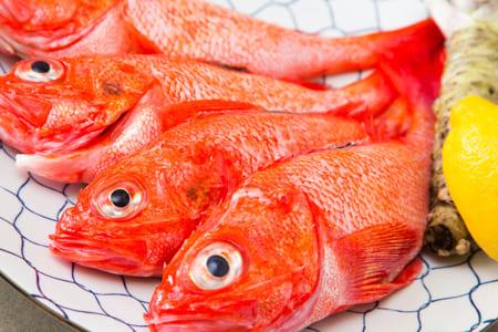 在幹煮,鹽烤,也推薦的最上等的北海道大翅鮶鮋